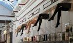 sklep z pończochami